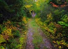 森林道路在秋天 库存图片