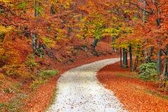 森林道路在秋天 免版税库存照片