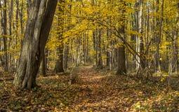绕森林道路在秋天 免版税库存照片