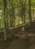 从森林道路的步行者赞赏的景色 库存图片