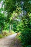 森林道路自然 库存照片