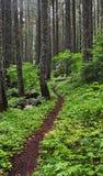 森林道路邀请 库存照片
