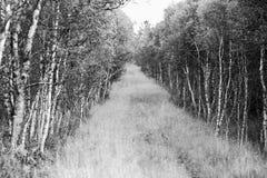 森林道路风景背景 免版税图库摄影