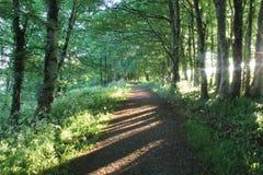 森林道路,清早,爱尔兰 免版税库存照片