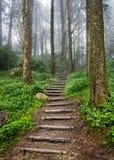 森林道路 免版税库存照片