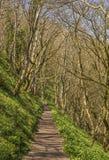 森林道路 库存照片