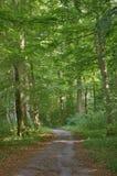 森林酸值mak路 库存照片