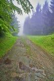 森林酸值mak路 免版税图库摄影