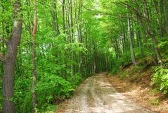 森林酸值mak路 免版税库存照片