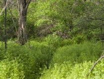 森林酸值mak路 免版税库存图片