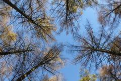 从森林里边被看见的蓝天 免版税图库摄影