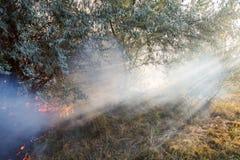 森林野火由于干燥刮风的天气 阳光轻审阅浓烟 光束 免版税库存照片