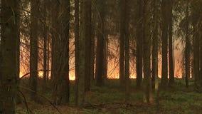 森林野火 干草和树的灼烧的领域 反对天空的浓烟 狂放的火由于热的刮风的天气在夏天 股票录像