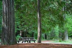 森林野餐红木表 免版税库存图片