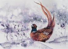 森林野鸡水彩绘了 免版税库存照片