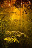 森林金子 免版税图库摄影