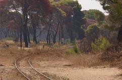 森林铁路运输 免版税库存图片