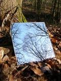 森林镜子 库存照片