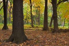 森林门 免版税库存图片