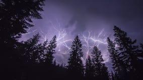 森林闪电 免版税库存图片