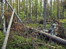 森林防风林 免版税库存照片