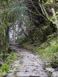 森林陡峭的步骤 免版税图库摄影