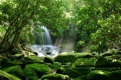 森林隐藏的雨瀑布 免版税库存图片