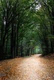 森林隧道 库存照片