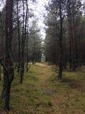 森林隧道 库存图片