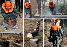 森林集合伐木工人工作 免版税库存照片