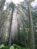 森林雨光束 免版税库存图片