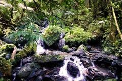 森林雨流 库存照片