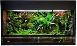 森林雨玻璃容器 免版税库存照片