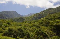 森林雨 库存图片