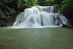 森林雨 免版税库存图片
