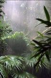 森林雨 免版税库存照片