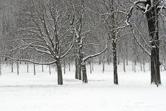 森林雪 库存照片