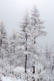 森林雪 免版税库存图片