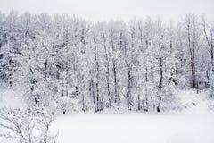 森林雪 图库摄影