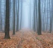 森林雾在美丽如画的秋天森林里 图库摄影