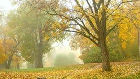 森林雾自然公园 股票录像