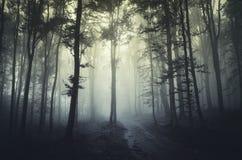 森林雾 图库摄影