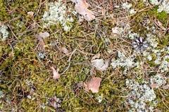 森林青苔纹理,绿色与片断的森林狂放的植被  免版税库存图片