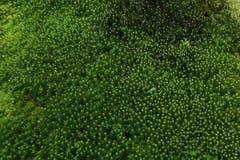 森林青苔背景 自然秀丽样式 库存图片