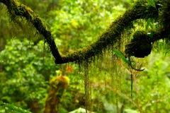 森林青苔雨 库存照片
