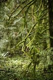 森林青苔 图库摄影