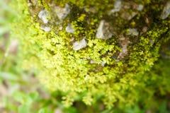 森林青苔 库存图片