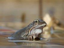 森林青蛙池塘 库存照片