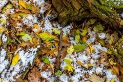 森林静物画,与早期的雪和被盖的秋天叶子 免版税库存照片