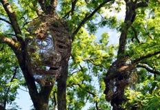 森林面孔 库存照片